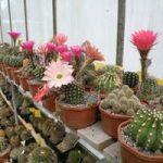 au cactus médocain